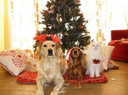 Regalos para las mascotas en navidad