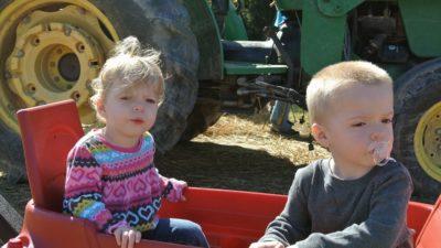 Fiestas infantiles de cumpleaños a domicilio con granja móvil de animales en Alicante